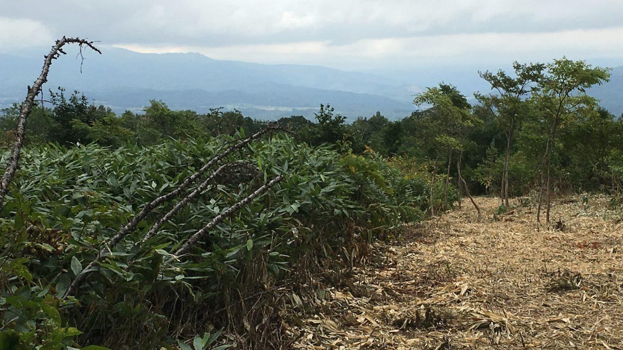 Niseko Annupuri Land Development Property Sales Hokkaido